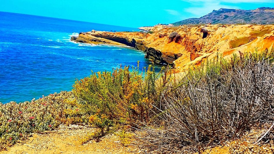 Beauty in Point Loma Nature_collection Seacollection Tranquility Pointloma Sandiego_ca California Hello World Hiddengem