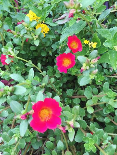 Flowers Flowers,Plants & Garden Flowers Flower Growth Plant Petal Nature Outdoors Beauty In Nature Day High Angle View No People Flower Head Green Color Blooming Leaf Close-up