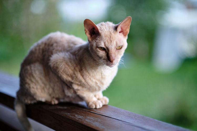 Close-up portrait of a cat on wood