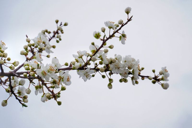 Çiçek Plant Flower Growth Fragility Tree Vulnerability  Flowering Plant Beauty In Nature No People Nature Sky White Color Clear Sky