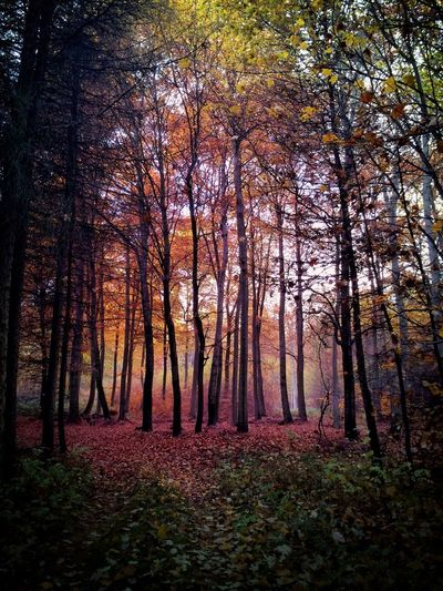 Autumn Autumn🍁🍁🍁 Nature Photography Outsidee Germany EyeEm Nature Lover