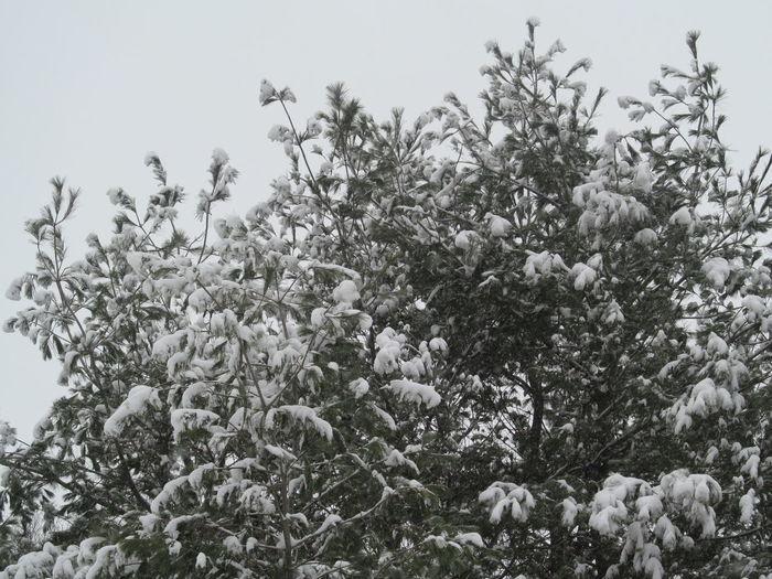 Plant Tree Snow