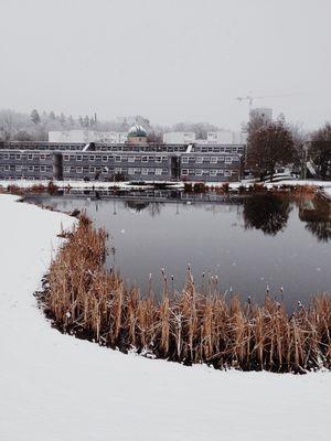 Nature Winter Studying University