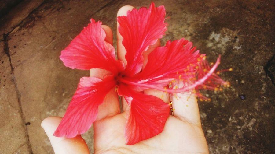 Bela flor Red