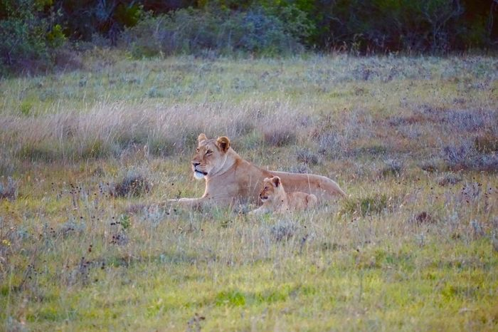 Awesome Nature Safari Family Mother Childhood South Africa Game Drive Savetheplanet Security Landscape