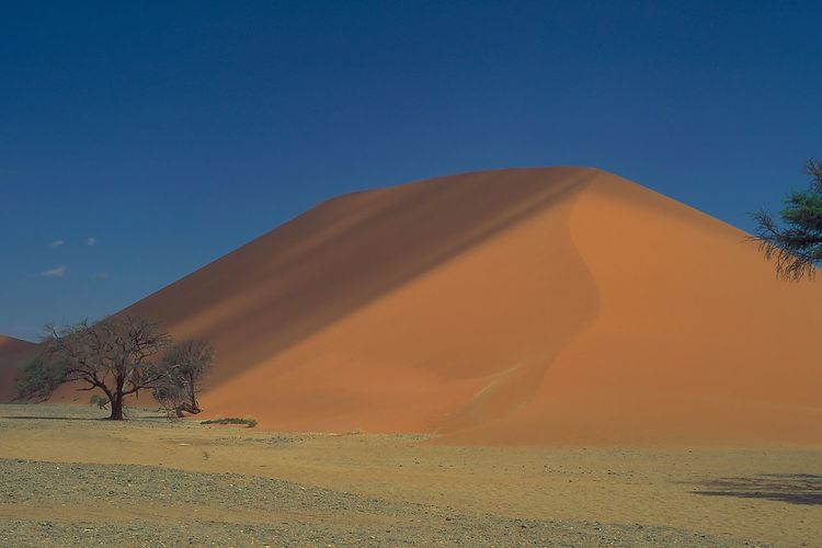 the oldest desert... Namib in Namibia Blue Color Desert Desert Plants Deserts Around The World EyeEm Market © Eyeem Marketplace Namib Desert Namibia Nature Collection Photography Is My Escape From Reality! Sossusvlei Desert Beauty Desert Landscape Landscapes Light And Shadows Nature Beauty Nature Is Art Nature Lover Photo Of The Day Photography #photo #photos #pic #pics #tagsforlikes #picture #pictures #snapshot #art #beautiful #instagood #picoftheday #photooftheday #color #all_shots #exposure #composition #focus #capture #moment Photography By Me Sand Dune Sand Dunes Trees And Nature Trees Collection The Traveler - 2019 EyeEm Awards