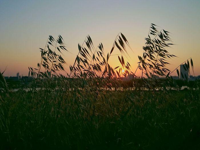 夕日 黄昏 河原 お疲れ様でした また明日