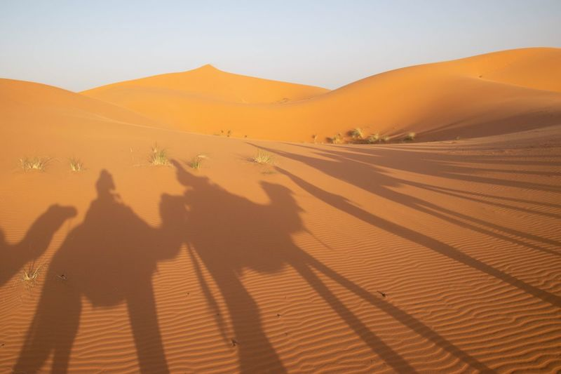 Shadow of people riding camels on sand at desert