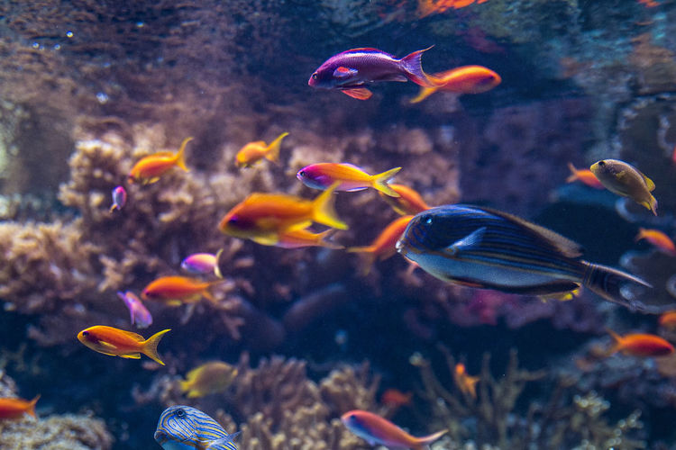 Colourful Fish Life Swimming Animal Animal Themes Animal Wildlife Aquarium Beauty In Nature Colorful Colour Fish Large Group Of Animals Marine Nature Ocean School Of Fish Sea Sea Life UnderSea Underwater Water