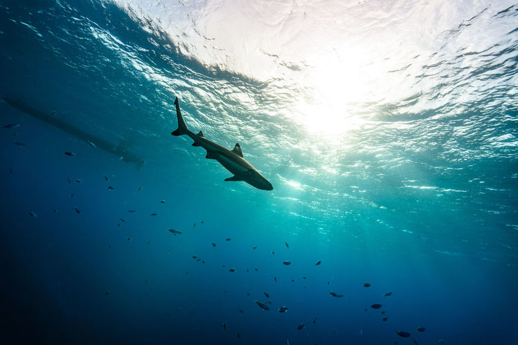 Low angle view of shark swimming in sea on sunny day