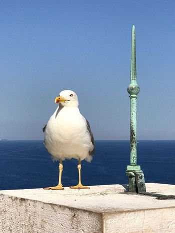 EyeEm Selects EyeEm Selects Sea Bird Seagull No People Horizon Over Water Bolonie Nature Outdoors Love Sea Seagulls And Sea Summertime Sommergefühle Ladyphotographerofthemonth