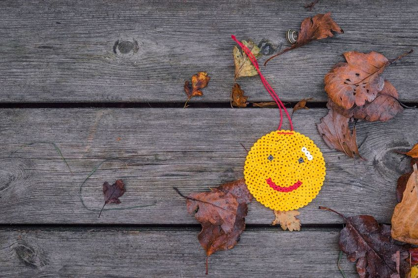 Smiley on wooden planks in autumn Mood Planks Creative Pearl Yellow Leaves Fall Autumn Smile Happy Emoji Smiley Wood - Material No People Flower Close-up Day