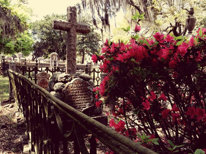 Magnolia Cemetary Colorful Peaceful South Southern Charm Cemetery Cemetery_shots EyeEmbestshots