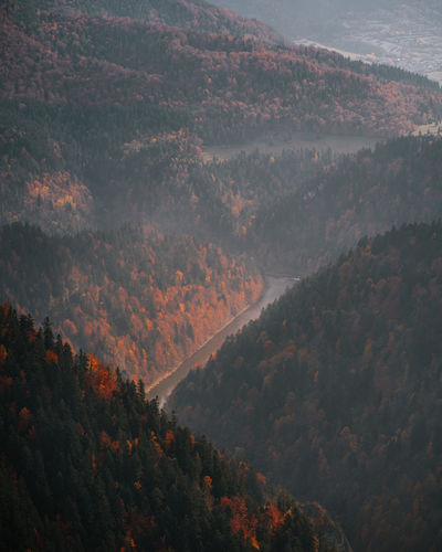 High angle view of trees on mountain