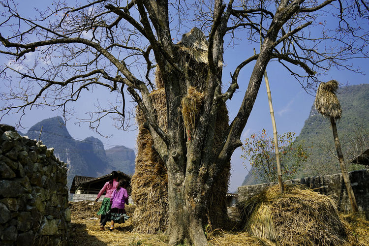 """H""""Mong child in Pho Cao village, Dong Van province Children HeritageVillage Travel Photography Tree And Sky Landscape Mountain Village Life Village Photography"""
