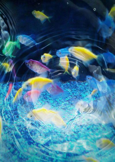 The Purist (no Edit, No Filter) Artistic Photo Artsy Photography Feeling Artsy Neon Fish  Fish Life In A Fish Bowl Aquatic Life Aquatic Beauty Aquarium Life Mystic Aquarium