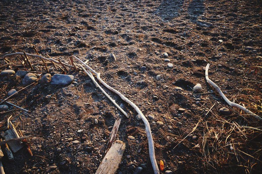 beach sand driftwood
