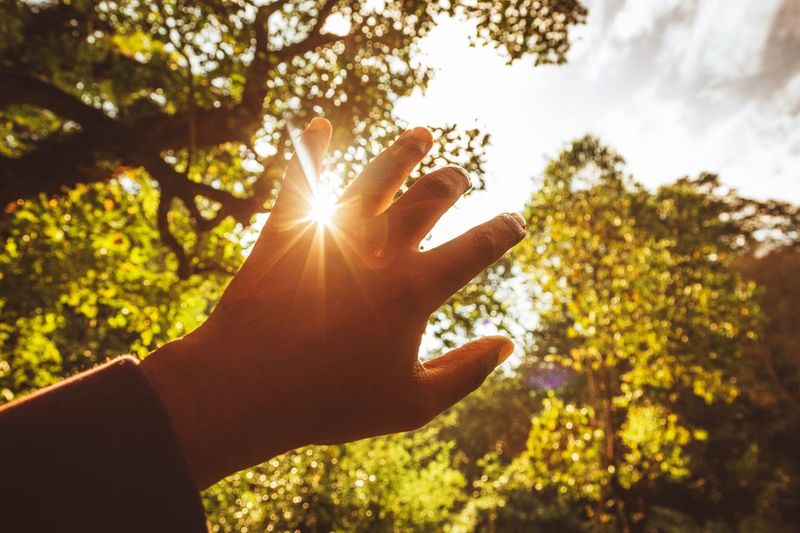 Cropped image of back lit hand against trees