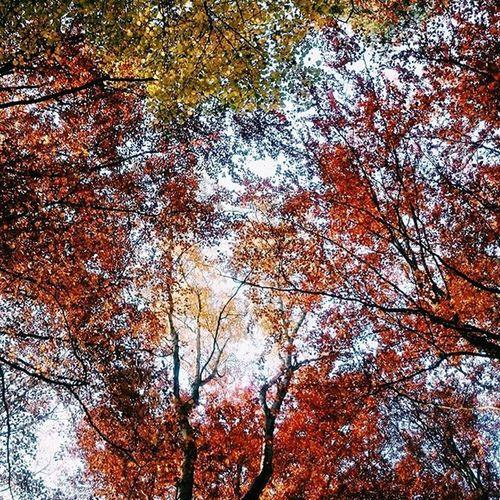 Sopot Ilovesopot Jesień Igersgdansk Vscocam Vzcopoland Vzcozlotapolska Vzcotricity Colour Of Life