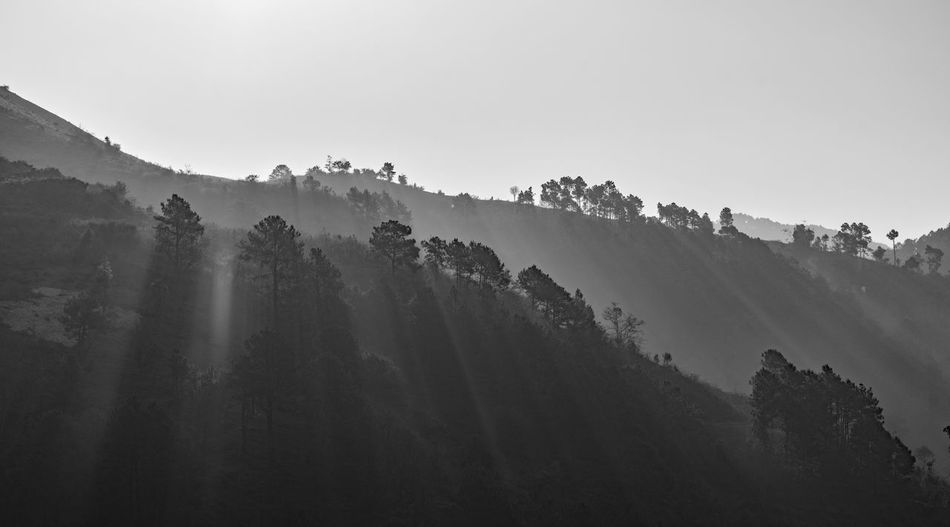 Panoramic shot of trees on mountain against sky