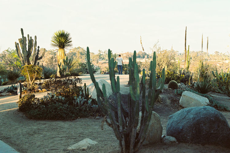 Alone Analogue Photography Cactus Cali California California Dreamin Ishootfilm View Balboa Park Beauty In Nature Cactus Day Faraway Film Photography Filmisnotdead Lanscape Nature No People Outdoors Park Plant Sky