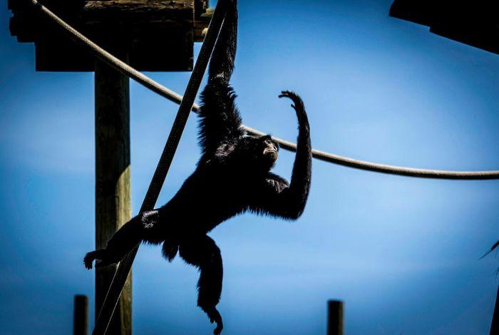 Zoo Animals  Tampa Tampa Fl Lowry Park Zoo