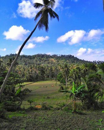 home Marinduque,Philippines