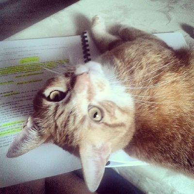 E io come dovrei fare a studiare???? Cat Cute Pets Stud Life