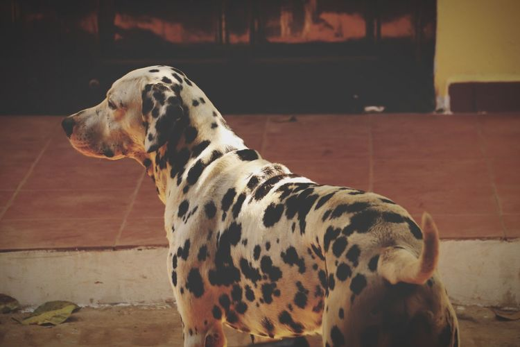A dog looking