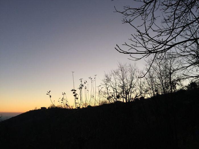 Sunset over Prekmurje, Slovenia, 2016. Prekmurje Lendva Lendava Lendavske Gorice Slovenia Sunset House Hill Branches Tree Silhouette Beauty In Nature Bare Tree Tranquil Scene Scenics Branch