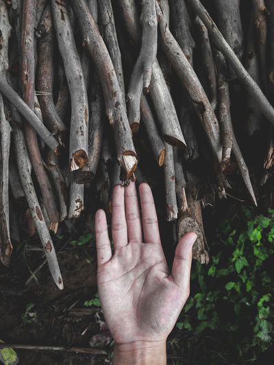 Close-Up Of Human Hand By Wooden Sticks In Forest