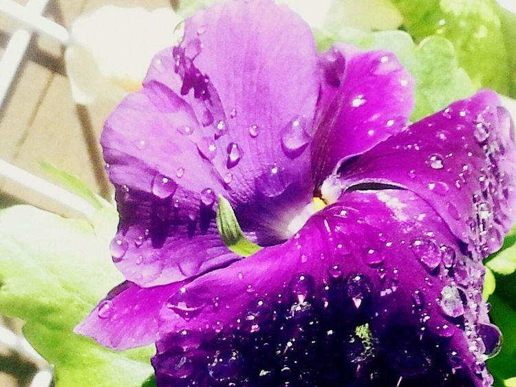 flower purple,