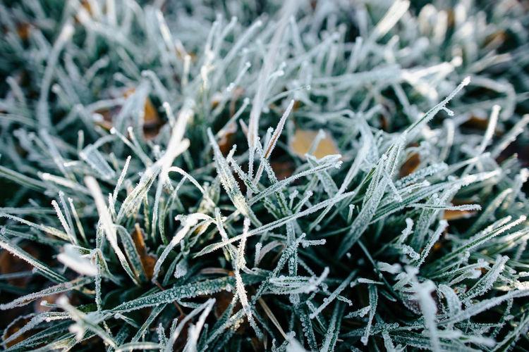 Full frame shot of grassy field during winter