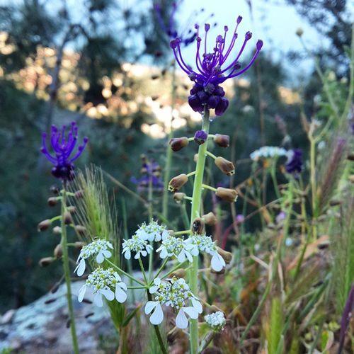Kazdağları Adatepe Zeusaltari Ilkbahar Yabanibitkiler Morçicekler Beyazçiçekler