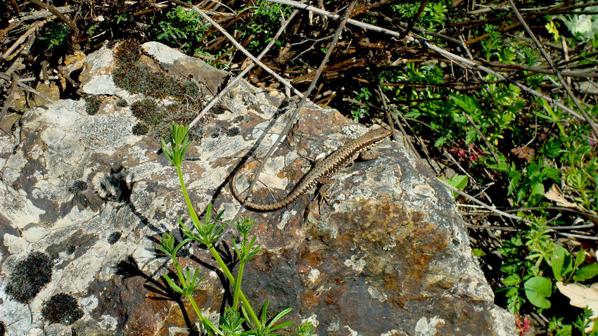 Animals In The Wild Close-up Lizard Lizard Natural Pattern Nature Reptile Wildlife