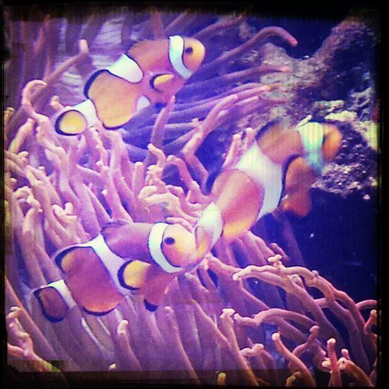 Finding Nemo im Tropenaquarim Hagenbeck  Hamburg
