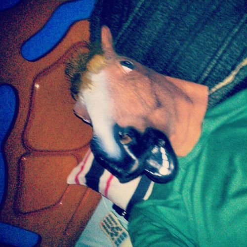 Partiu Cama Dormir Instagood Instahorse Horsemask