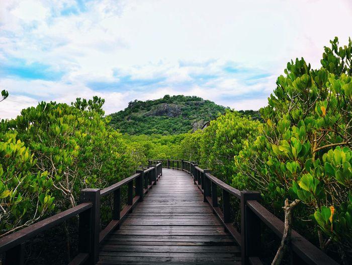 Footbridge amidst plants and trees against sky