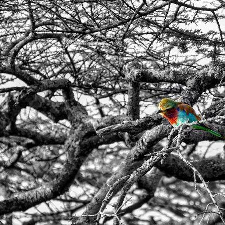 Bird Safari Pajaro