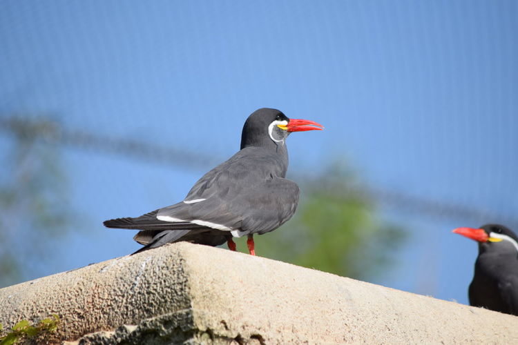Close-up of bird perching on retaining wall against sky
