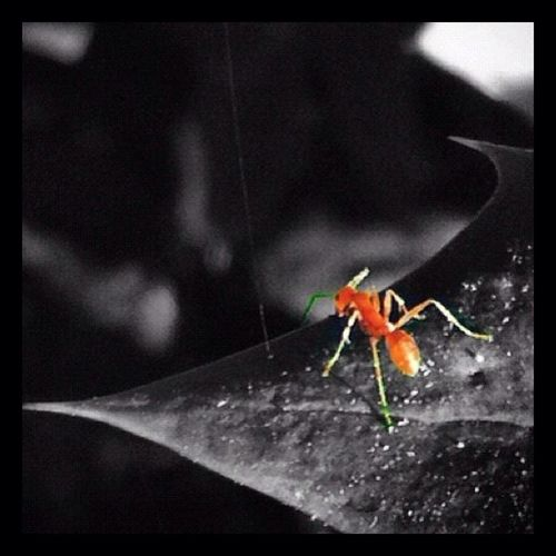 Close-up of insect on spider web against black background
