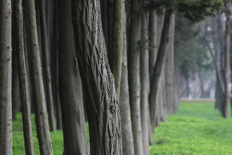 Tree Tree Trunk