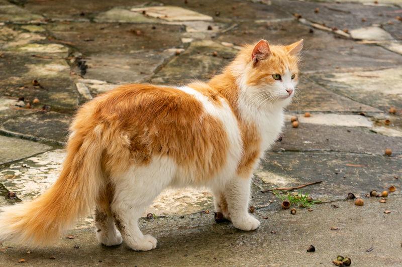 Cat Cyprus