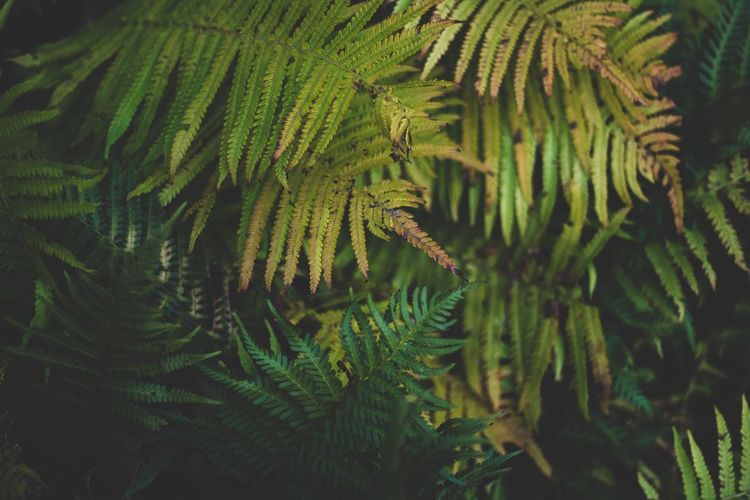 Nature Leaf Growth Green Color Beauty In Nature Day Fern Close-up No People Outdoors Tree Freshness Ferns Freshness Tree Palm Tree Tranquility