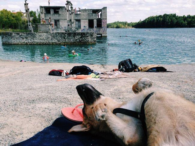 Adventure Buddies Dog Landscape Sunbathing Estonia Adventure The Essence Of Summer