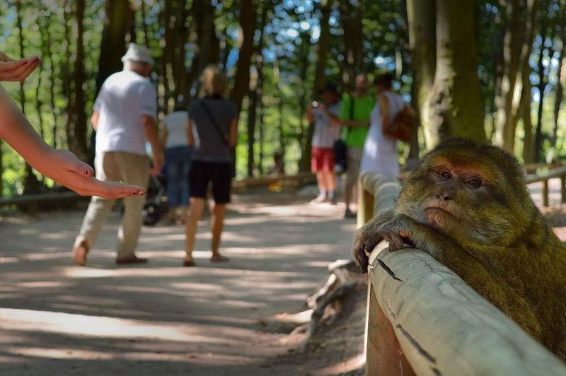 / Pose photo pour ce magot / Singe Tree Nature Animals Montagnesinges Vosges Instashot Instadaily First Eyeem Photo