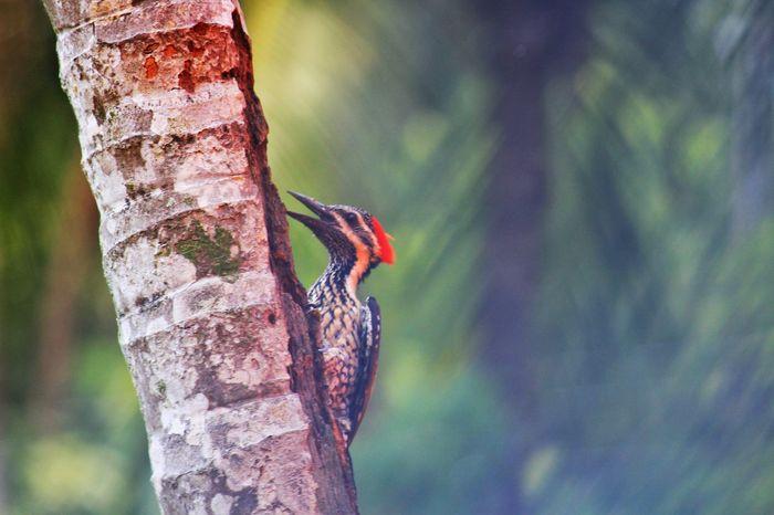 Wood pecker Bird EyeEm Selects Wood Pecker Bird Bird Photography Birds🐦⛅