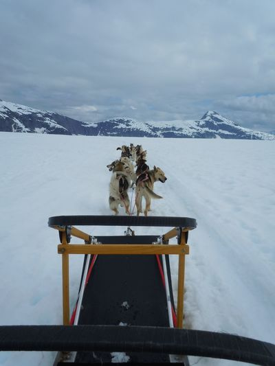 Dog Sled At Norris Glacier Against Cloudy Sky