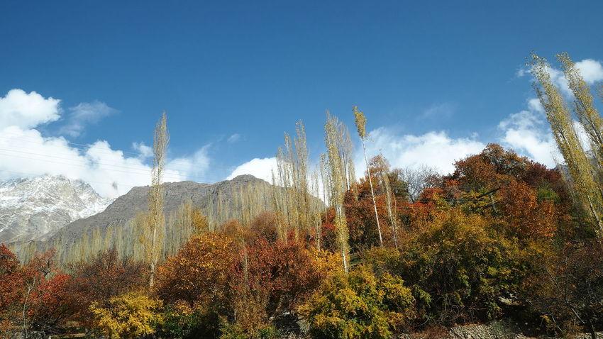 Sky Nature Beauty In Nature Tree Poplars Mountain Autumn Birdeyeview Landscape