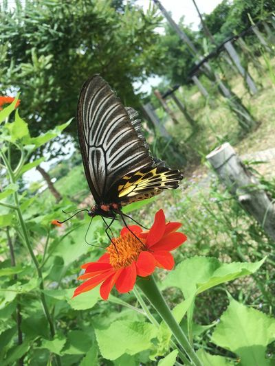 butterfly and flower Insect Animal Themes Animals In The Wild One Animal Butterfly - Insect Nature Animal Wildlife Plant Growth Flower Day Wildlife Butterfly No People Beauty In Nature Outdoors Green Color Focus On Foreground Leaf Freshness